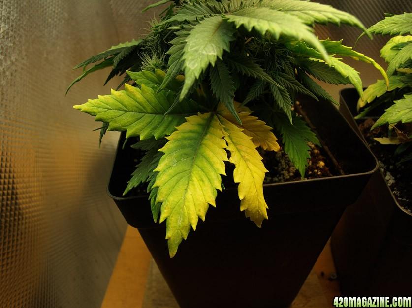 Leaf_CloseUp.jpg