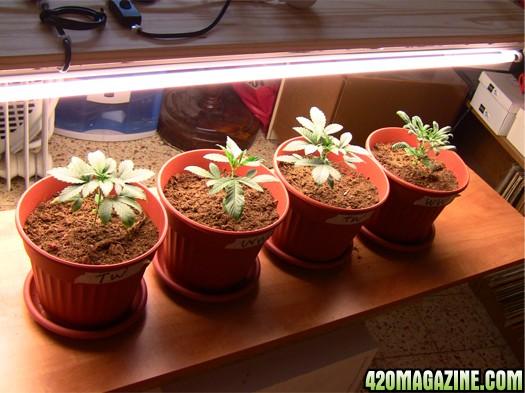 all_plants_-_day17.JPG