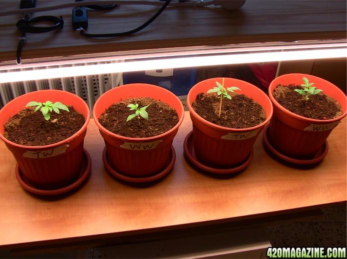 all_plants_b.JPG