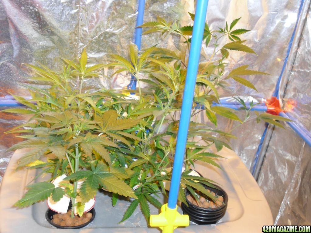 grow_00514.JPG