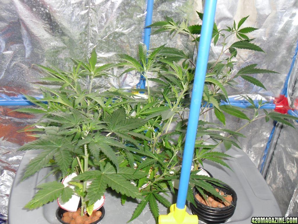 grow_00613.JPG