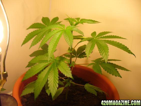 grow_jernol_014.jpg