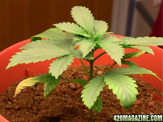 plant_no1_-_day17.JPG