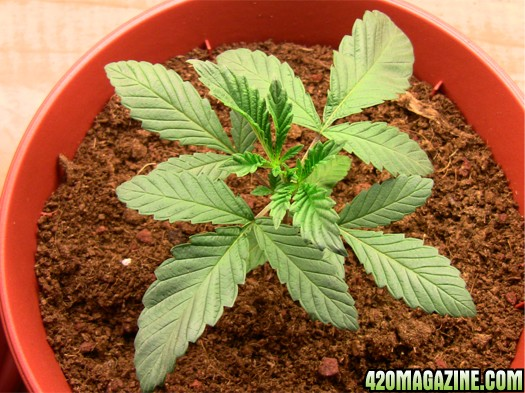 plant_no2_-_day17.JPG