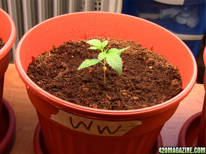 plant_no2_a.JPG