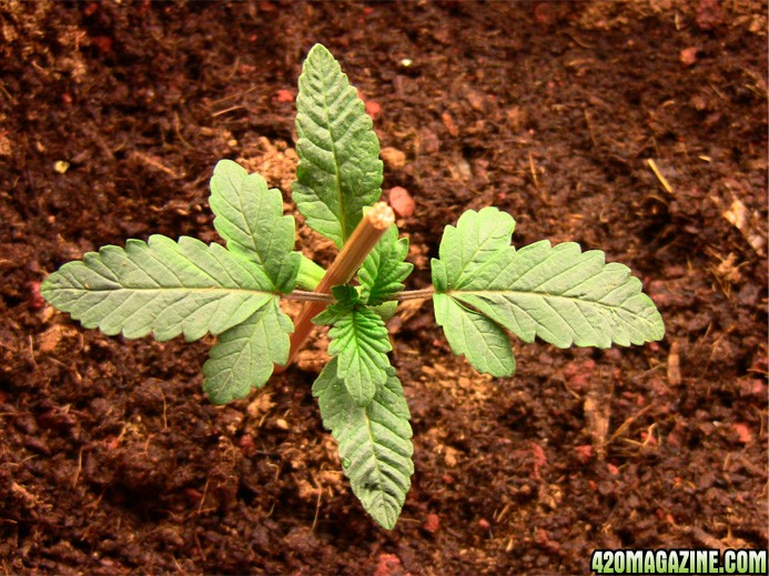 plant_no3_b.JPG