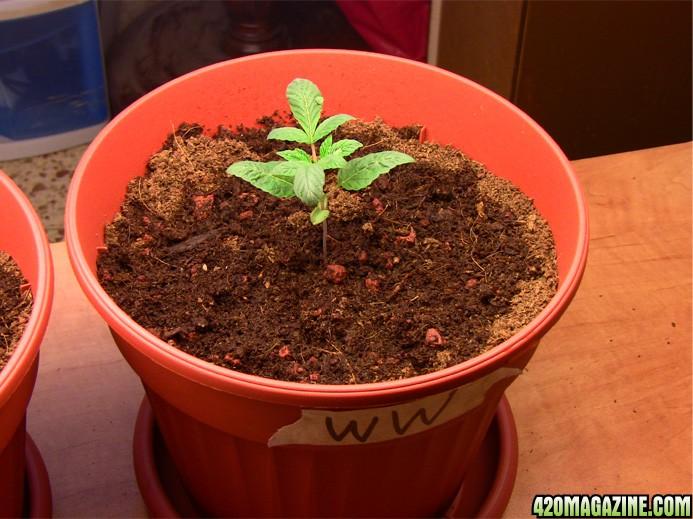 plant_no4_a.JPG