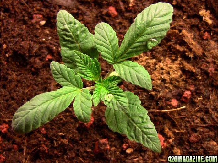 plant_no4_b.JPG