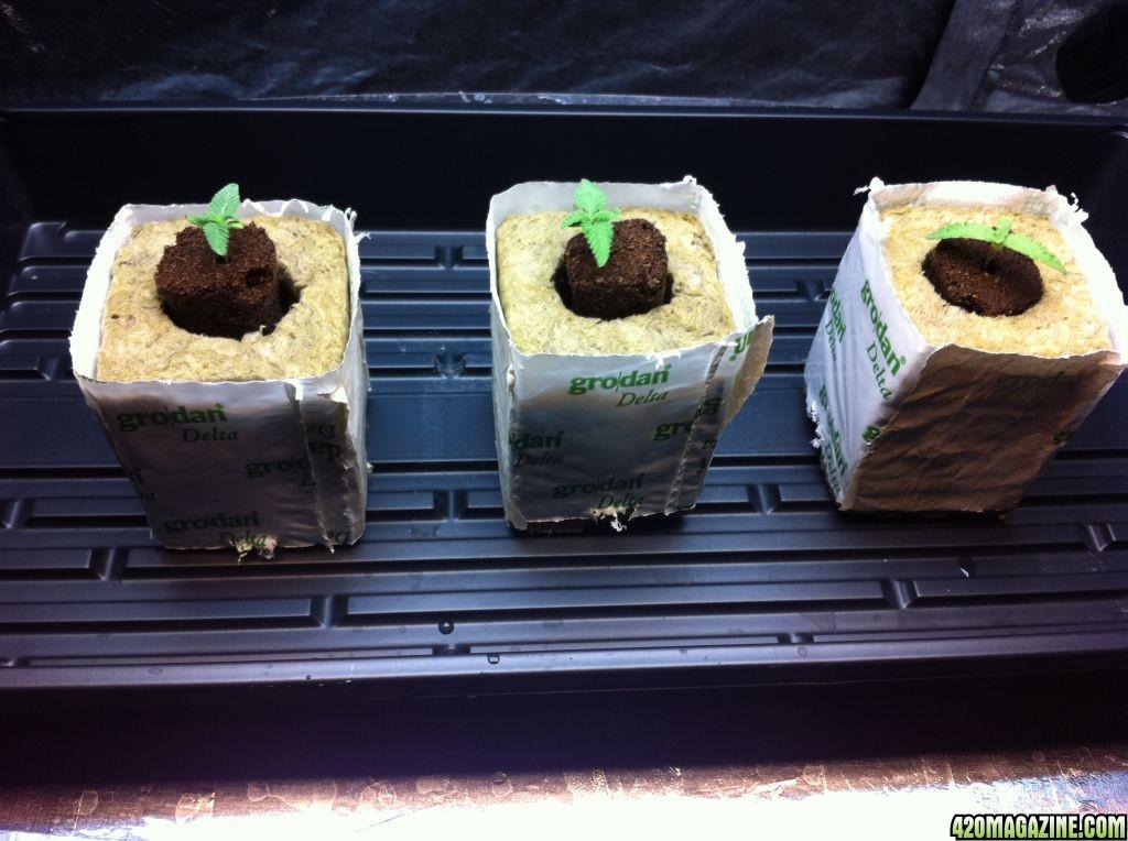 seedlings29.JPG
