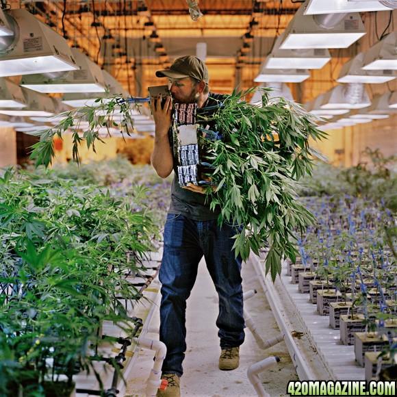 Bongtastic's Beginner's Guide to Autoflowering Cannabis
