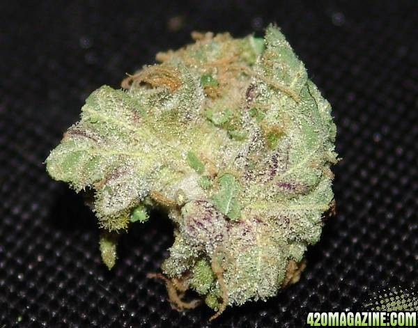 Purple Grandaddy Kush