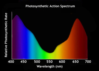 475052779-action_spectrum.jpg