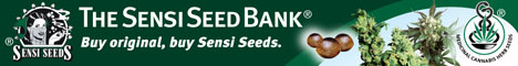 Sensi Seed Blog