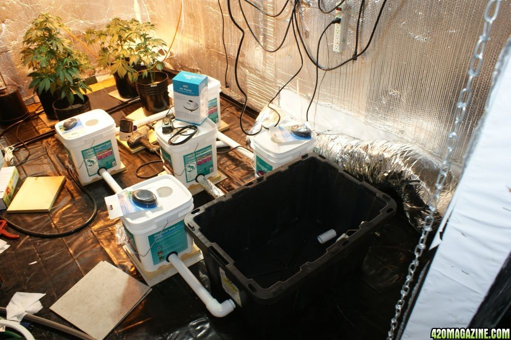 Multi-Plant Recirculating DWC Test | 420 Magazine ®