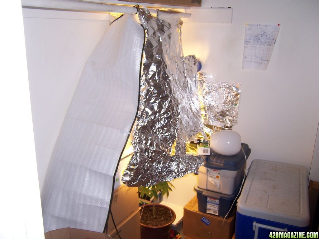 Poor Mans CFL Closet Grow First Plant 420 Magazine