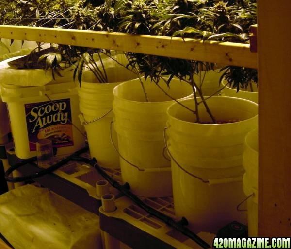 Growroom_setup_001.JPG