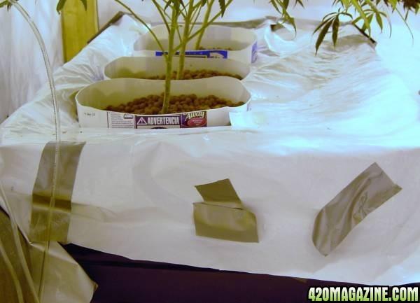 Growroom_setup_005.JPG