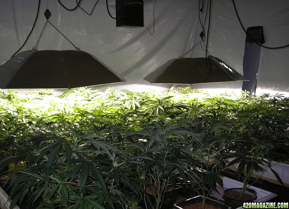 Is It Legal To Set Up A Grow Room