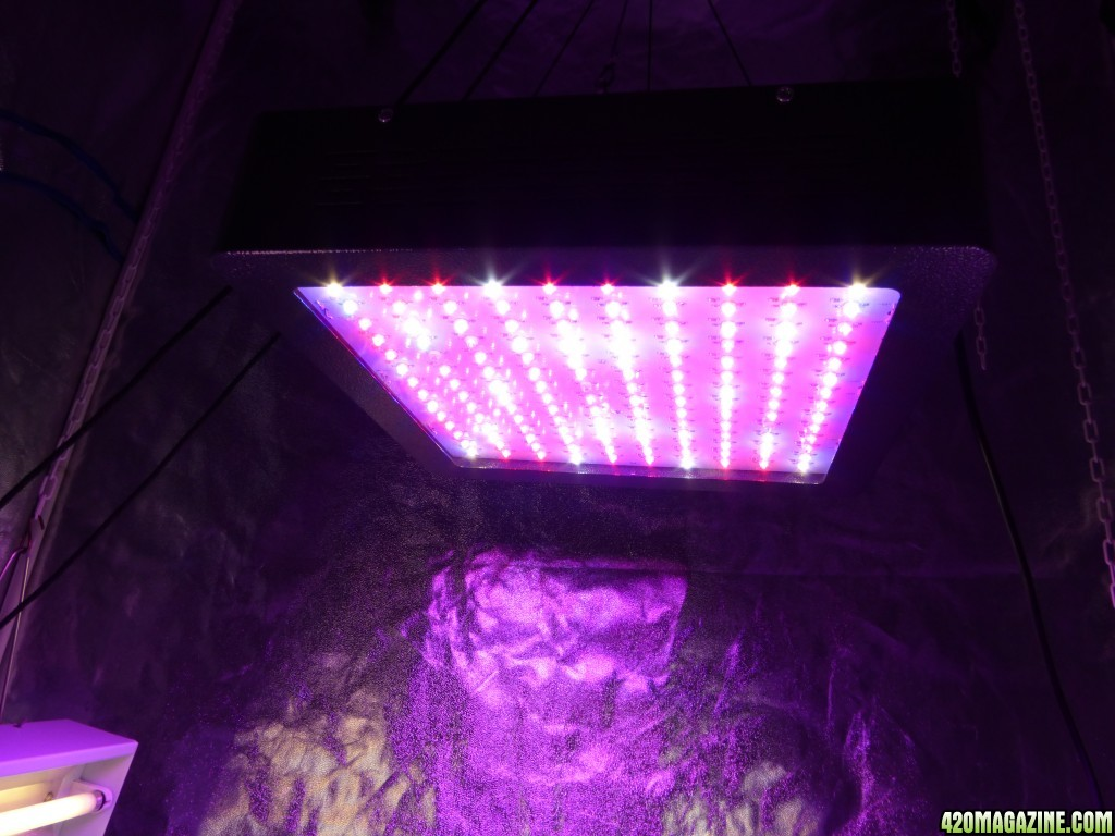 Mars Hydro Led Grow Light Discussion Page 299