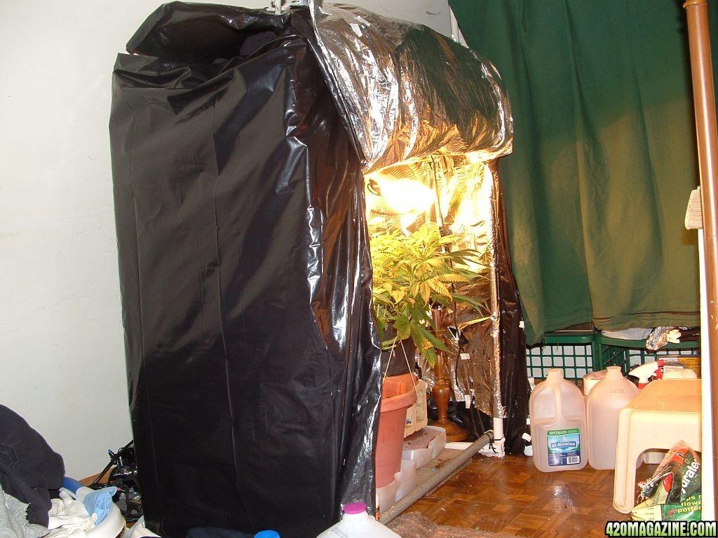 Re Woodsmanu0027s Northern Light #5 Grow & Woodsmanu0027s Northern Light #5 Grow - Page 56