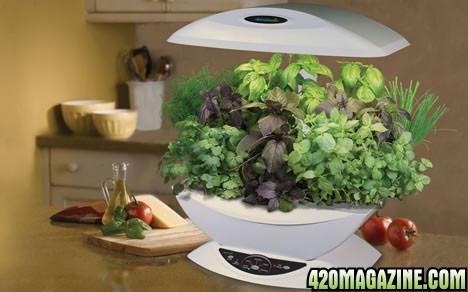 Aerogarden. Aerogarden Cannabis Harvest. Home Design Ideas