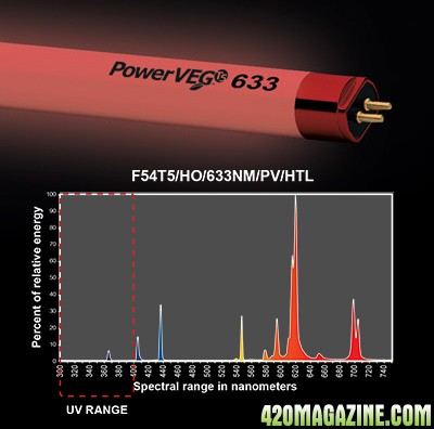 end-power-veg-633.jpg