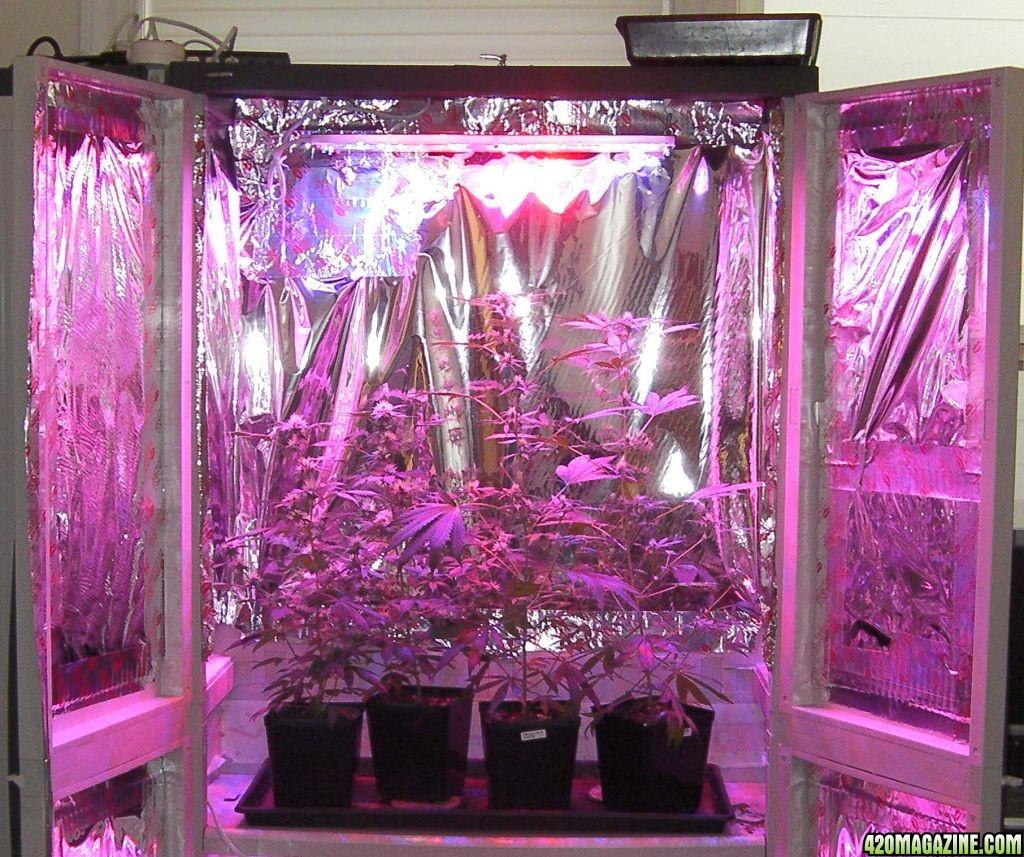 Design Led Light Setup: Haight Solid State LED Grow Lights