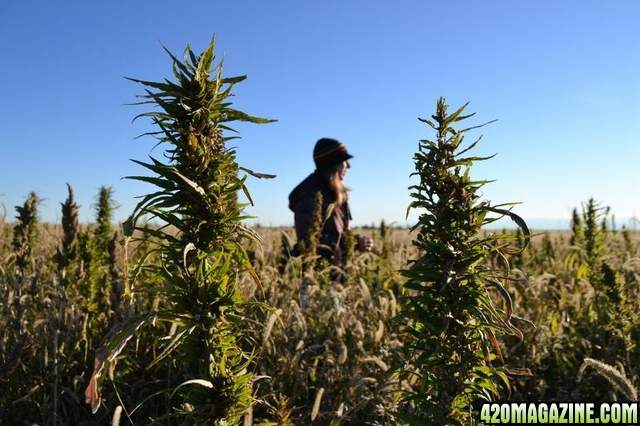 420-girl-britney-bong.jpg