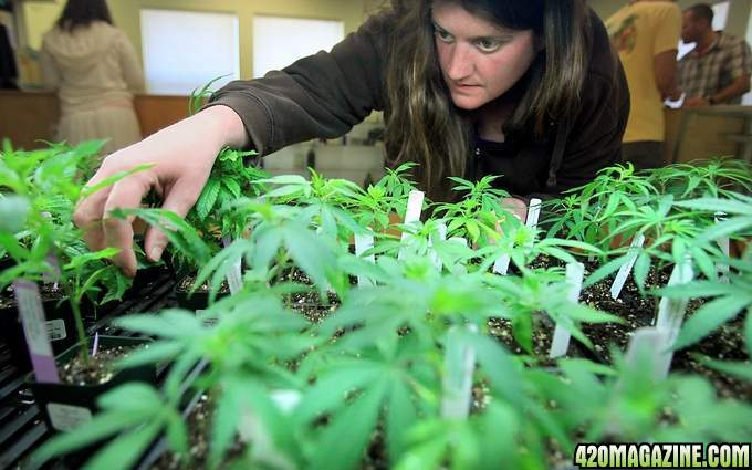 420-girl-celeste-star-smoking-weed1.JPG