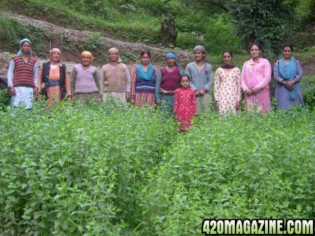 Himachal_women_farmers1.jpg