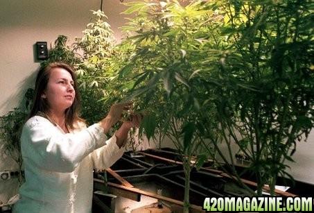 Ventura_medical_marijuana1.JPG