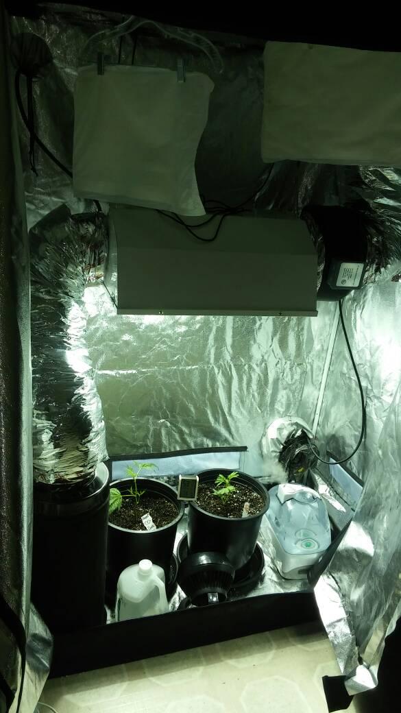600W - 2x4 Tent - First Grow   420 Magazine ®