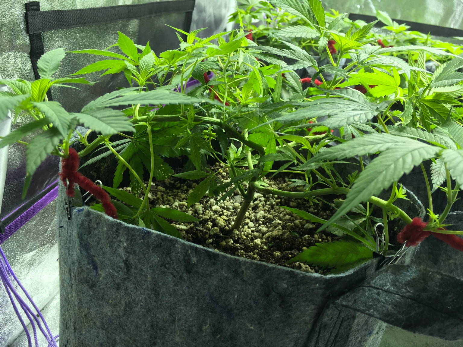 how to grow in a 4x4 tent