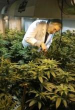 Colorado-Washington-Massachusetts-Marijuana