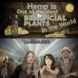 Hemp Can Save The World