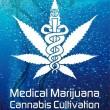 Medical-Marijuana-Cannabis-Cultivation-Trees-of-Life-at-the-University-of-London