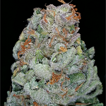 Nug of the Month – September 2015