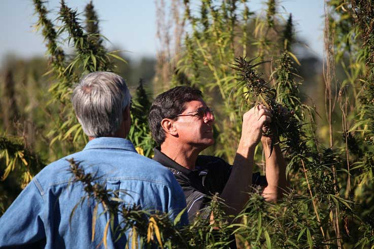 Hemp research 737