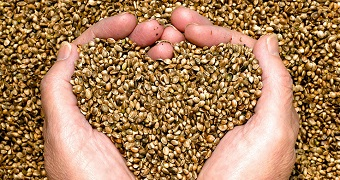 Colorado Hemp Seed Certification