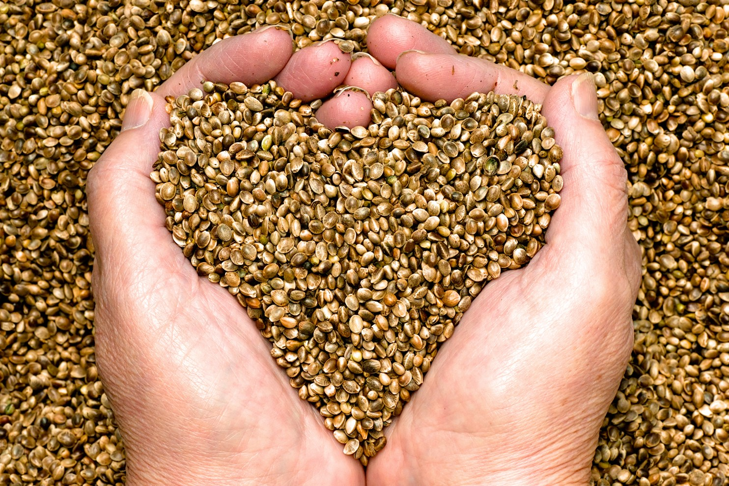 Colorado Hemp Seed Certification