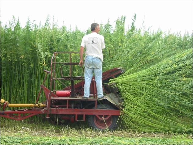 Harvest w tractor04