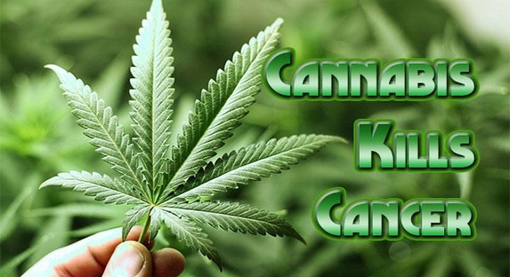 cannabis-kills-cancer1