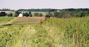 Alabama Legislature Passes Bill To Research Hemp As Cash Crop