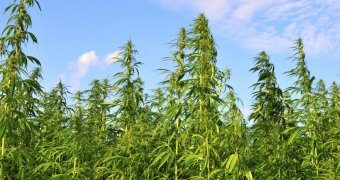 Hemp Could Replace Petroleum As A Fuel Source