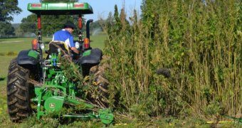 Kentucky Approves 12,800 Acres For Hemp