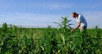 Arkansas Lawmakers To Legalize Hemp