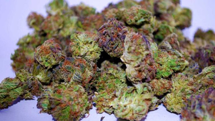 an introduction to the advantages of marijuana legalization Argumentative essay: legalization of cannabis moreover, the legalization of marijuana can also yield a new tax source for the government.