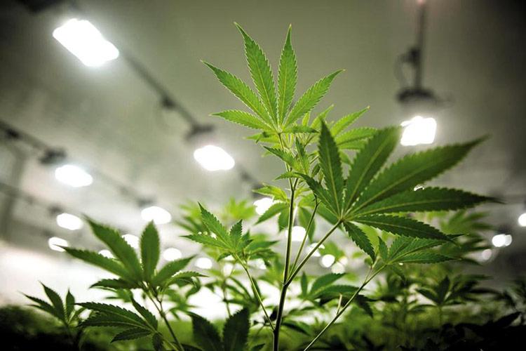 University Of Utah Launches $740,000 study On How Marijuana